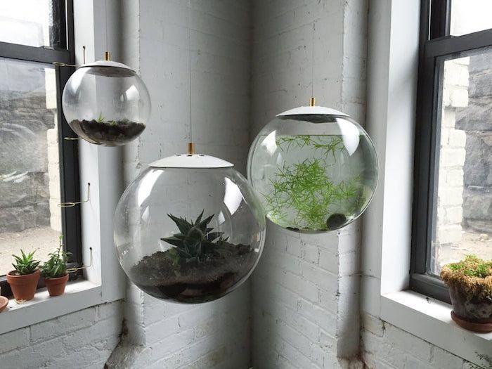 un aquarium et deux terrariums ronds suspendus