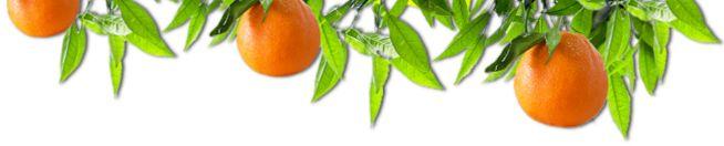 5 minutes Orange Julius recipe   http://maya-kitchenette.com/5-minutes-orange-julius-recipe/