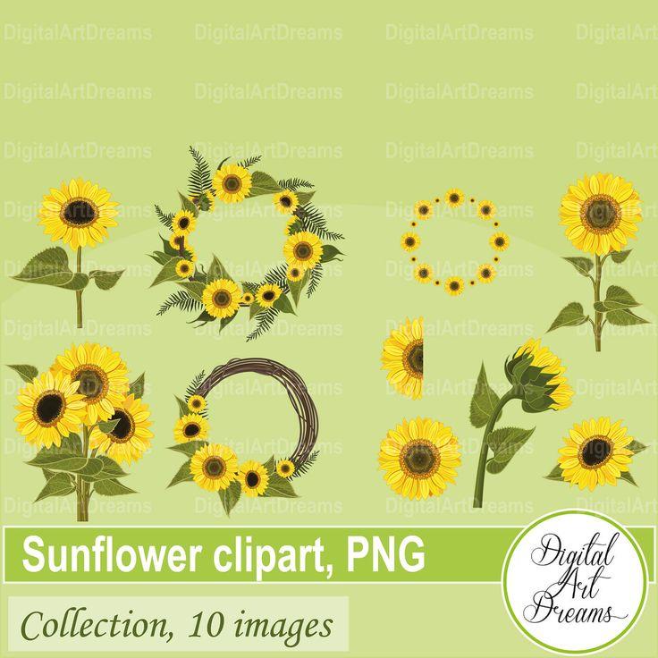 Sunflower clipart Sunflower border clipart Half sunflower ... (736 x 736 Pixel)