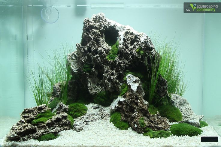 Favourites: Nano tank by Marcel-Runde First position in the nano category of the Art of Planted Aquarium contest in Hannover 2014. Photo credit by Aquascaping Community.