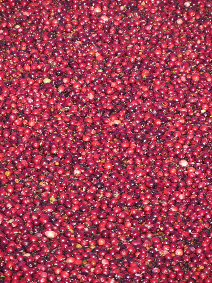 So. Many. Cranberries!