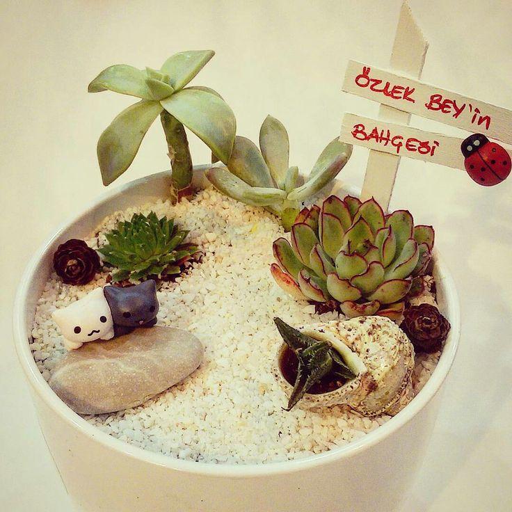 Terrarium hobi bahçeleri sukulent minyatür bahçe