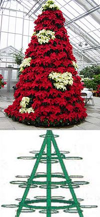 Make A Poinsettia Tree? Would love to do this AFTER Christmas (ps, how long do poinsettias keep)