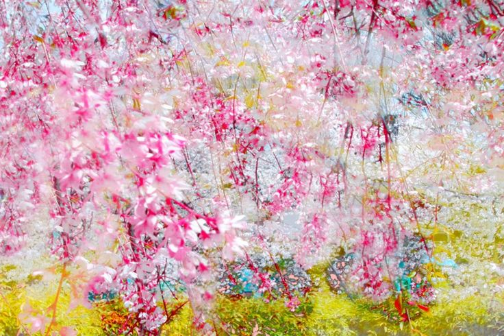 Annelies Strba: Sakura, 2008