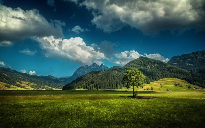 Download wallpapers Mountains, alps, summer, meadow, forest, Switzerland