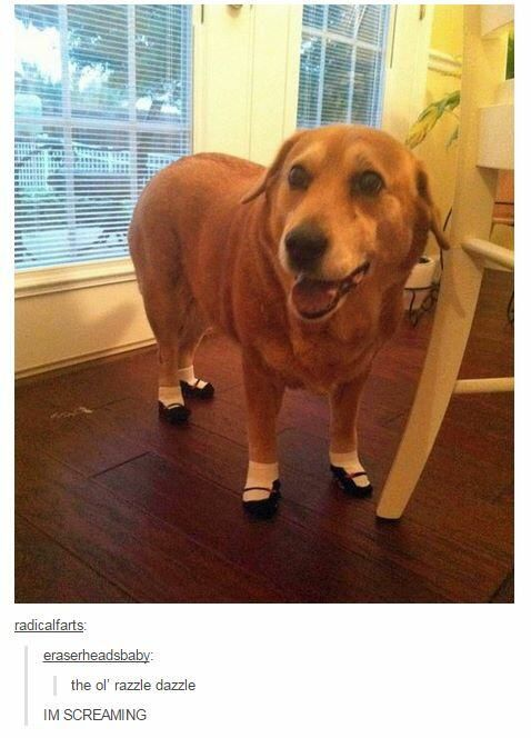 20 Text Posts That Prove Tumblr Users Love Dogs More Than Anything | Pleated-Jeans.com