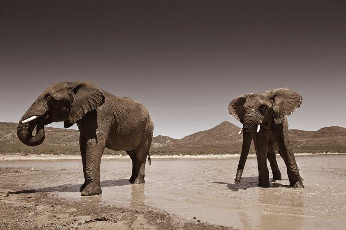 En outre, grâce à ce type d'animaux, la réserve est viable sur le plan économique ; sa continuation est donc garantie (les sanctuaires pour animaux de ferme, quant à eux, sont dans une situation économique bien plus précaire).