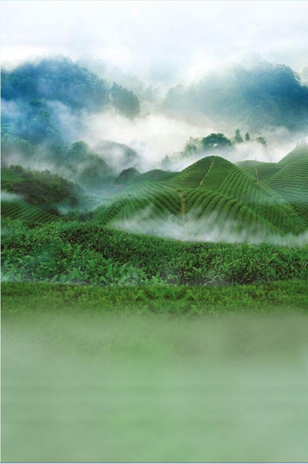 5x7ft фотографии backdrops150x220cm утро лягушка зеленая гора фотографии назад капли ткань фон 5711
