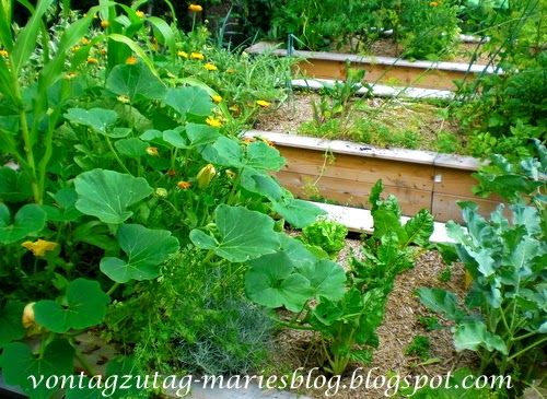 Von Tag zu Tag - Maries Blog: Hochbeete