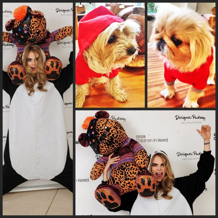 Moda Köpek Kıyafetleri Köpek Modası Köpek Modası Köpek Giysileri Köpekler Panda Panda kıyafetleri panda tasarımları Panda designs Dod Clothes Pet Clothes Panda Sweatshirt red yorkie pekingese