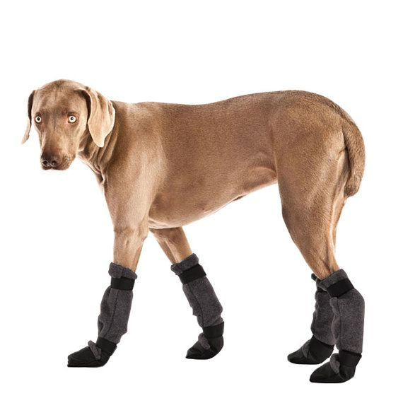 Large Dog Booties For Snow