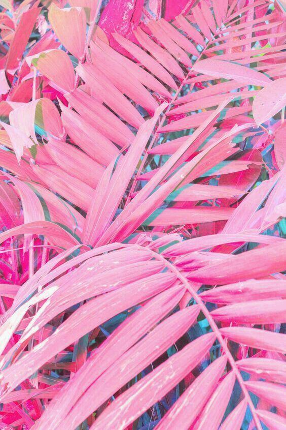 Fondo de palmeras rosas