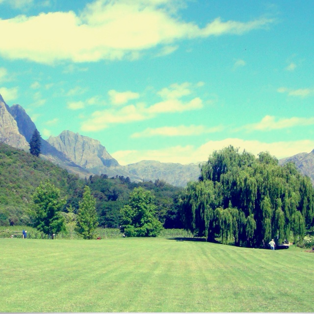 Summer In Stellenbosch