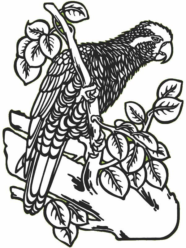 tropical bird coloring pages - coloring pages tropical birds news bubblews
