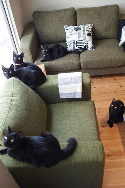 13 Ways Black Cats Make Life Amazing #refinery29 http://www.refinery29.com/the-dodo/64#slide5 They're considered lucky in Japan. (There's even a black-cat cat cafe!)