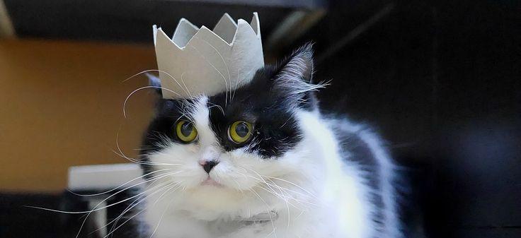 PsBattle: a cat wearing a cardboard crown