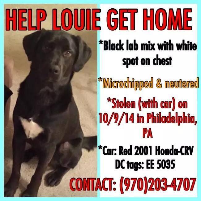 Počet nápadov na tému Lost Pets na Pintereste 17 najlepších - lost dog flyer template word