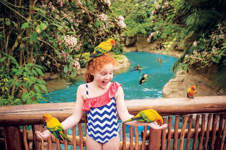 Explorer's Aviary is a colourful discovery just beyond the beaches and waterfalls.