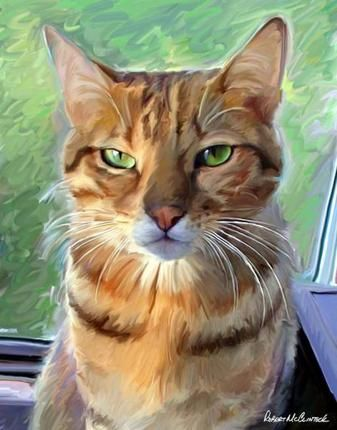 Bengal Art Print, This reminds me of My Simon, orange tabby, he had that same look, miss him.