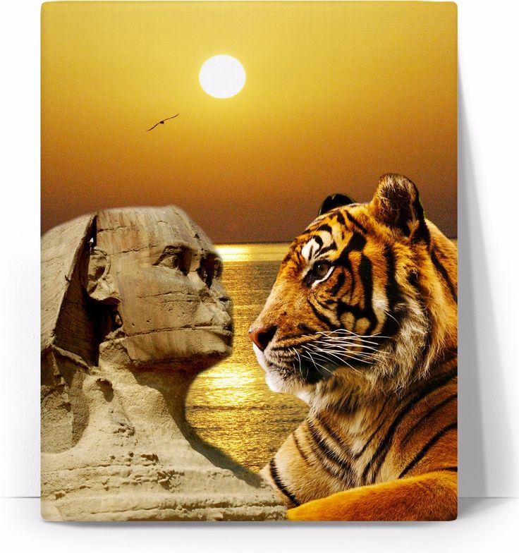 Check out my new product https://www.rageon.com/products/tiger-and-sphinx-art-canvas-print?aff=BWeX on RageOn!