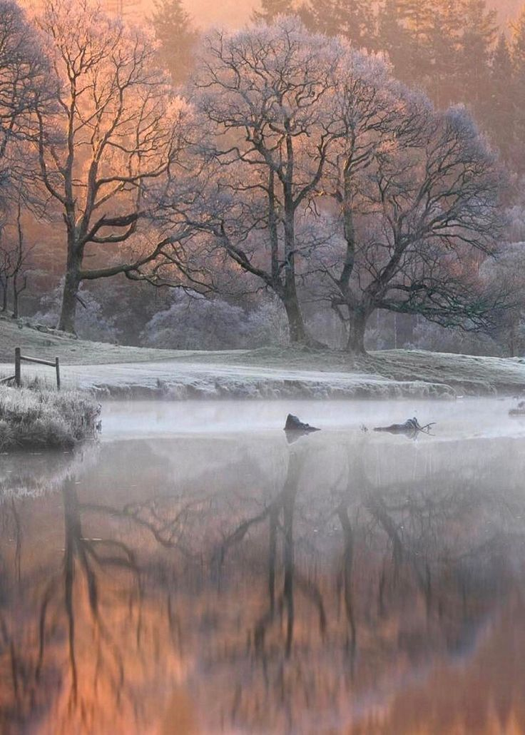 winter's blush...