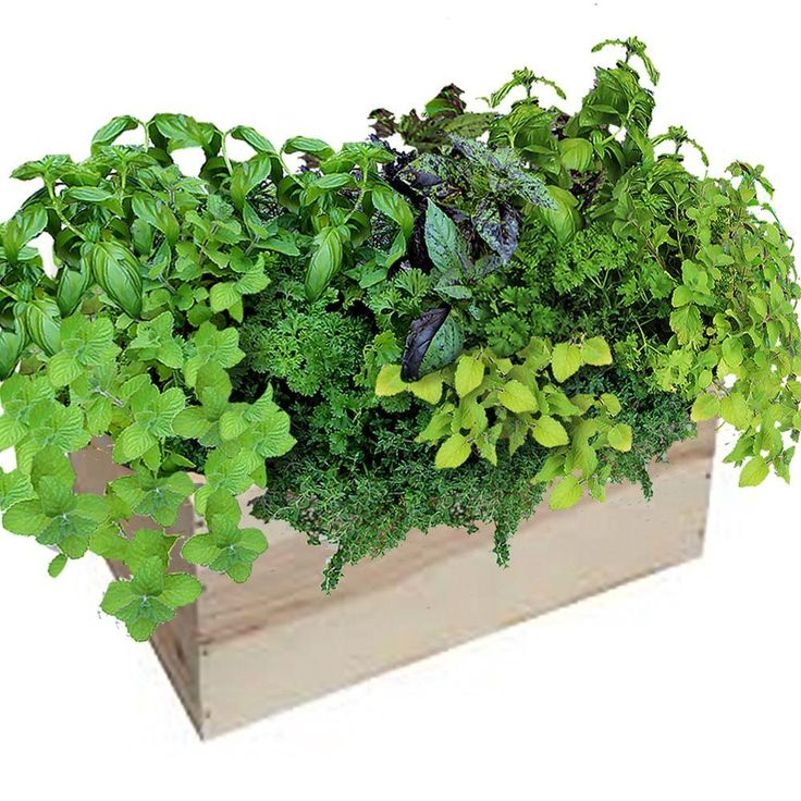 14 in. Herb Mix Grilling Herb BoxGHB1 The Home Depot