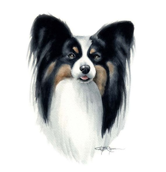 PAPILLON Dog Watercolor Painting ART Print Signed by k9artgallery, $12.50