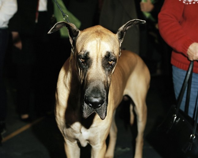 what a charming face this one has.Sweets Danes