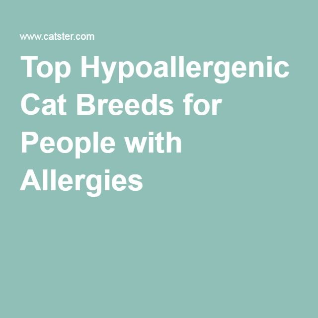 Top Hypoallergenic Cat Breeds for People with Allergies