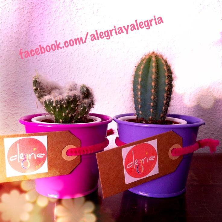 Cactus con Alegría !!