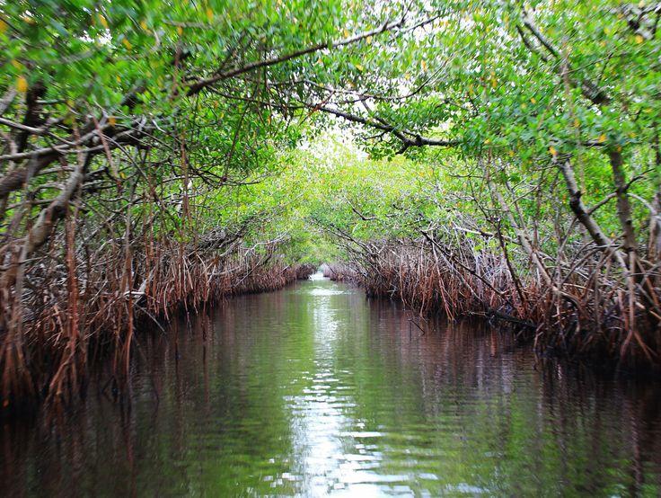 Everglades National Park in Florida http://www.nps.gov/ever/index.htm