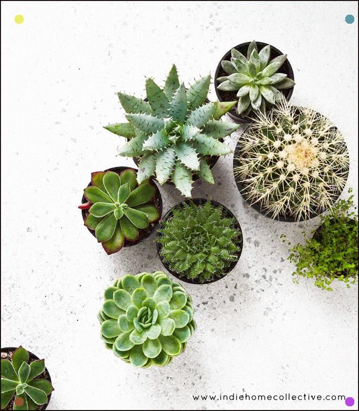 Plants In Store Stylingphotography Indie Home