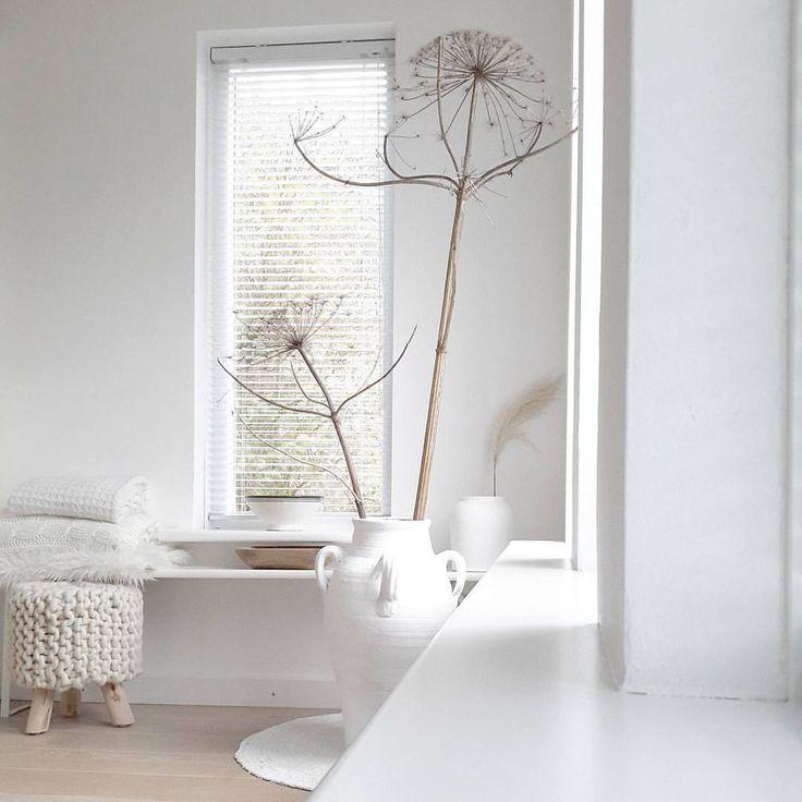 """Wat een """"enge"""" verhalen weer over de berenklauw.  Het is zo'n prachtige plant. Gedroogd, maar ook nu met z'n  helder witte bloem. Maar zo gevaarlijk!! Oppassen."""