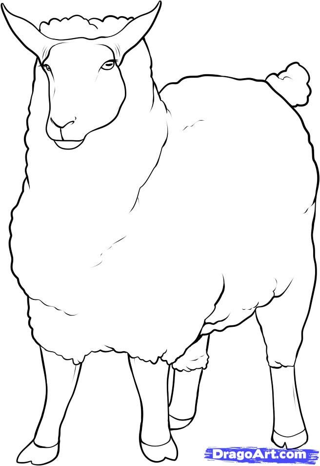 Best 25 Sheep Drawing Ideas On Pinterest