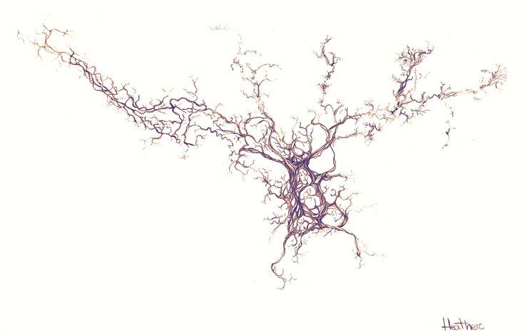 This is a cultured olfactory bulb neuron from mice, labeled with anti-beta-tubulin antibody.   To get this print and other stuff: http://lodeacca.deviantart.com/art/Olfactory-Bulb-Neuron-597798361   Follow MirrorNeuron Artwork on Facebook: https://www.facebook.com/Mirror-Neuron-Artwork-171592469887551/: