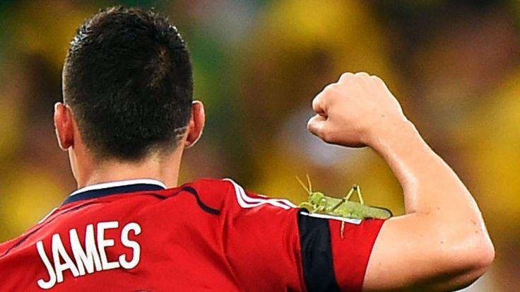 El grillo que acompañó a James Rodríguez....