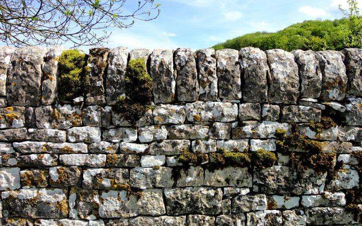 Каменный забор, мох, камни, природа,