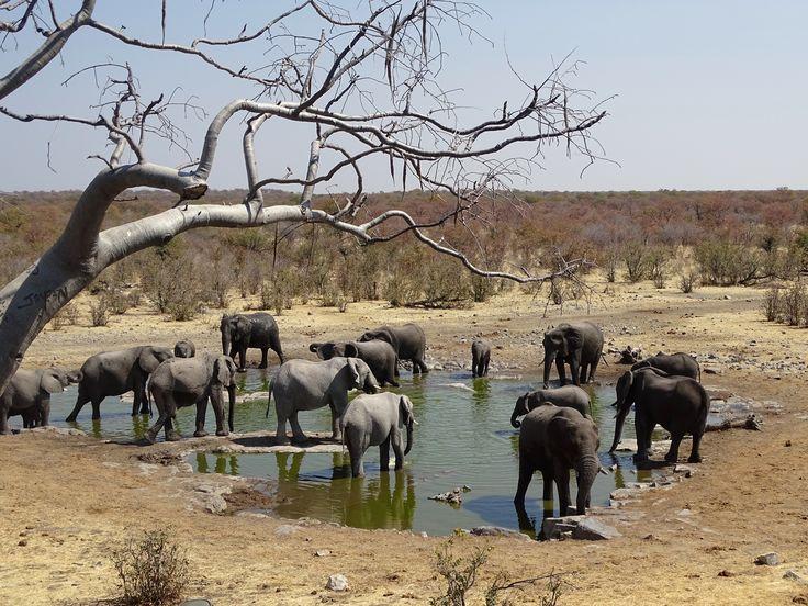 Etosha National Park, Namibia. Photo: Christa Fris
