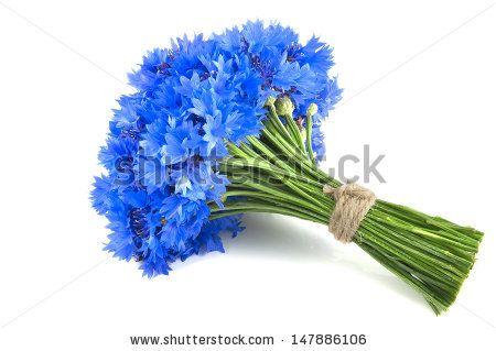 bouquet of cornflowers - Поиск в Google