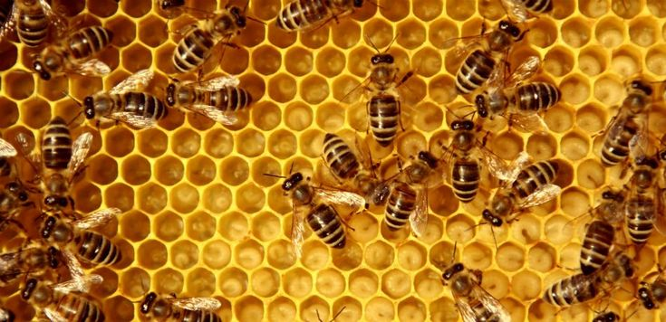 Vandals Kill Bees In Iowa: Officials Say At Least 500,000 Bees Died In Shocking Incident