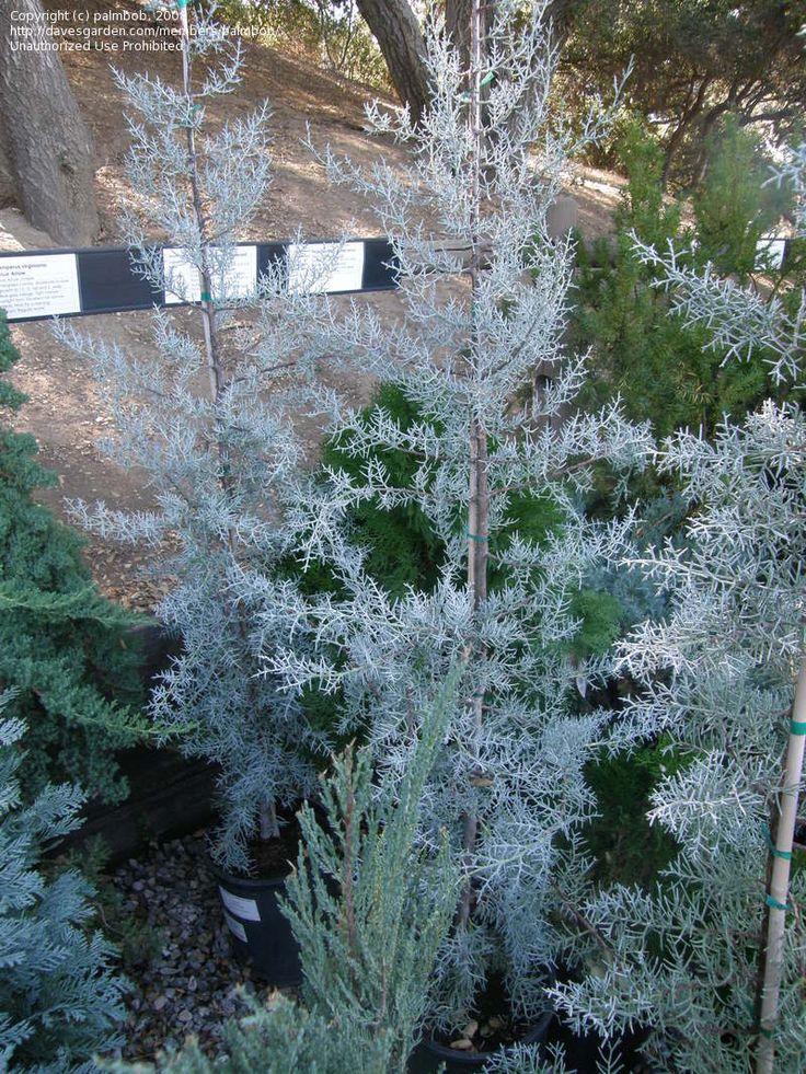 Outdoor Garden Plants