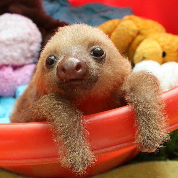 Baby Sloths With Teddy Bears