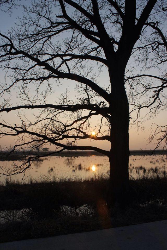 Kralose Heide, Dwingeloo, Drenthe.