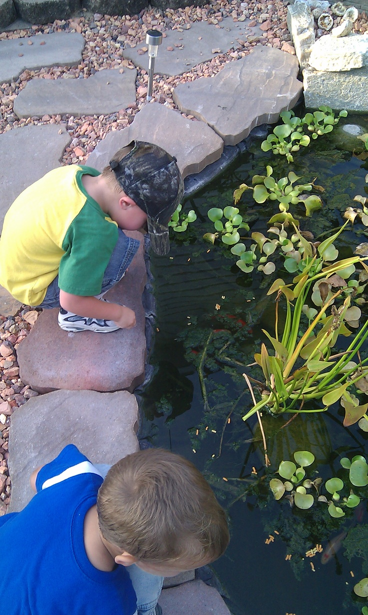 Grandson's exploring our fish pond