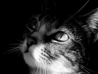Enzo Montano: Ennio Flaiano - Lo Scienziato cerca un gatto