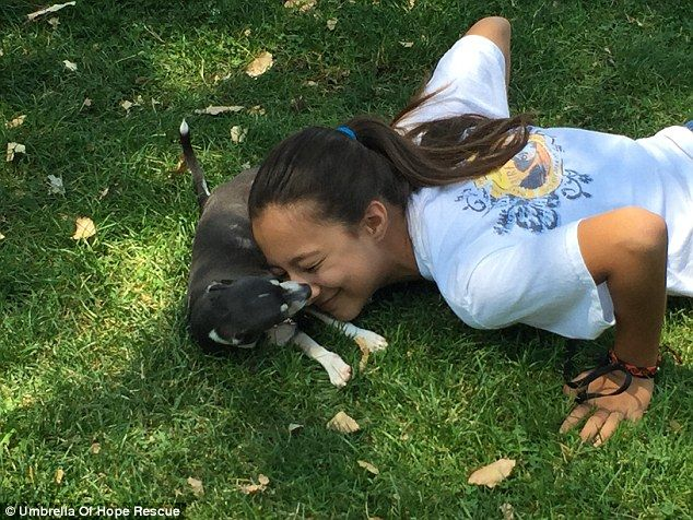 Chloe é uma menina de 12 anos que sofreu queimaduras de segunra e terceiro grau quando ainda era bebê: alguém jogou chá quente nela. Ela nunca imaginou que seu caminho ia se cruzar com o caminho de Fireman, um Chihuahua que também foi vítima de queimaduras.  Quando ele tinha apenas 2 meses de vida, …