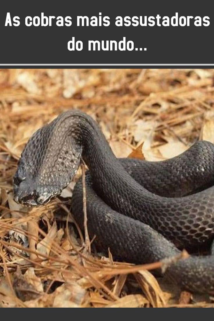 As Cobras Mais Assustadoras Do Mundo Cobras Animais Lindos