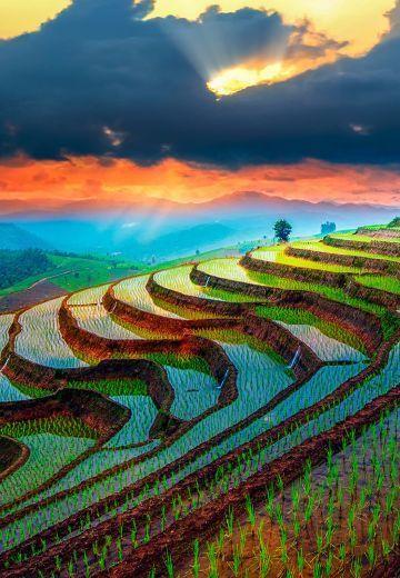 Rizières en terrasses en Thaïlande