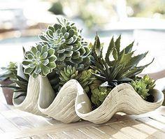 Shell planter - Succulents