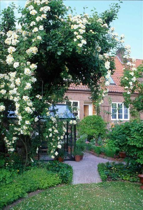 Små trädgårdar – 10 gyllene regler för den lilla trädgården - Alltomtradgard
